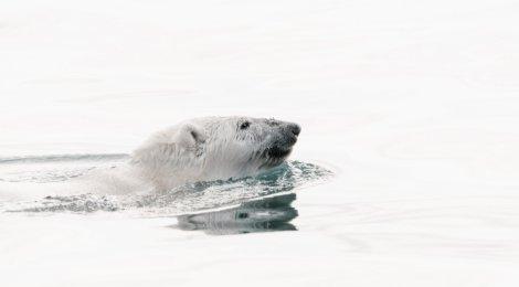 Eestil on viimane aeg taotleda vaatlejastaatust Arktika Nõukogus